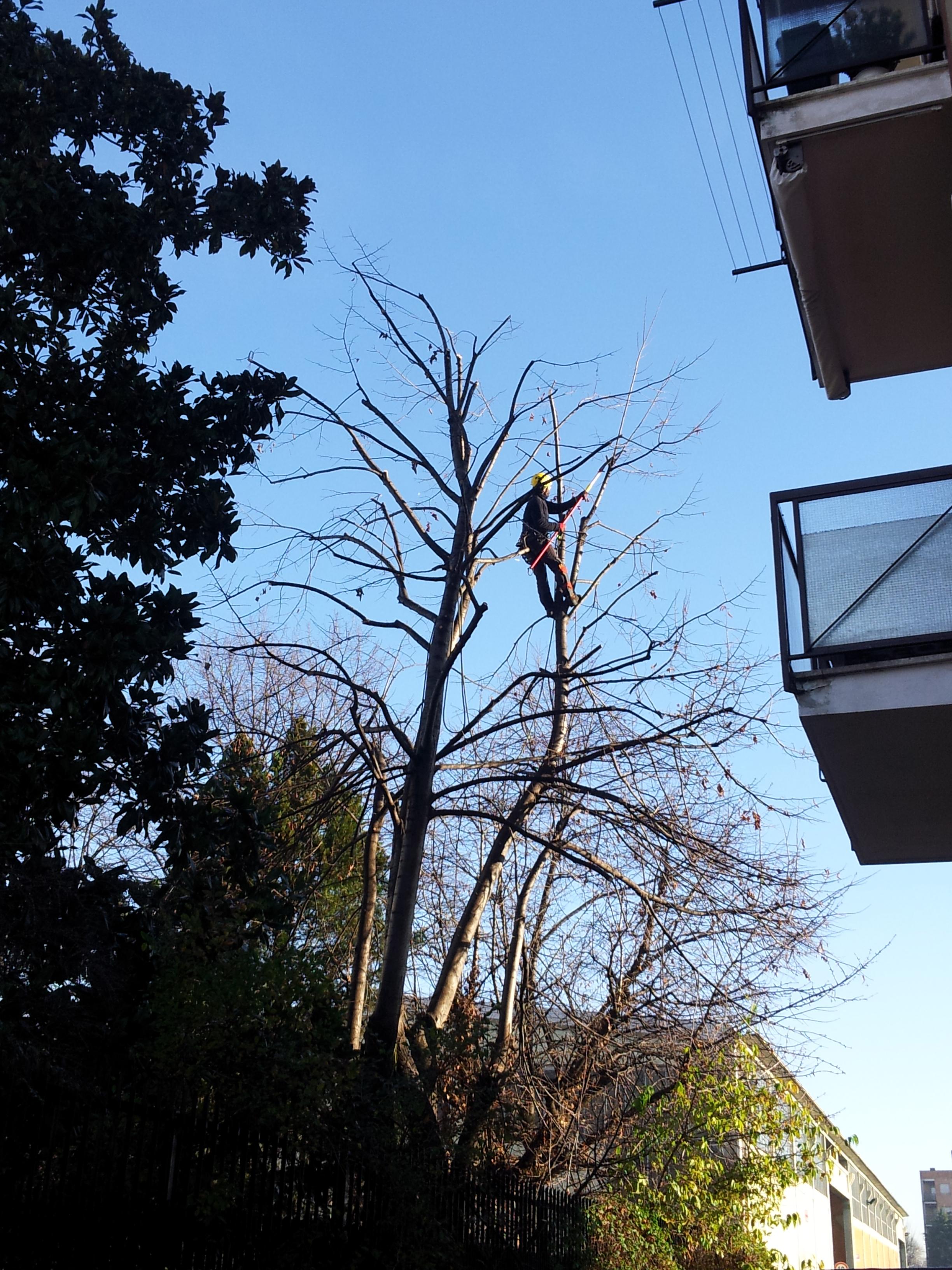 Potature e abbattimenti di alberi montanari giardini - Alberi condominiali in giardini privati ...
